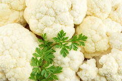 Raw cauliflower on a pile forming background Royalty Free Stock Photography