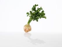 Raw celery root Royalty Free Stock Photo