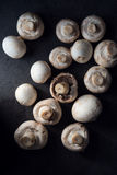Raw champignons bacground Stock Image