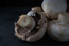 Raw champignons background Royalty Free Stock Photo