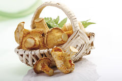 Raw chanterelles in basket Royalty Free Stock Images