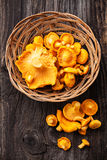 Raw chanterelles in basket Royalty Free Stock Photos