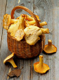 Raw Chanterelles Royalty Free Stock Images