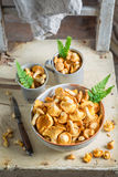 Raw chanterelles with green fern from forest. Closeup of raw chanterelles with green fern from forest Stock Photos