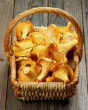 Raw Chanterelles Stock Images