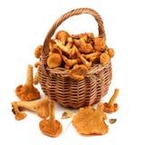 Raw Chanterelles Mushrooms Stock Photography