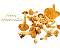 Raw Chanterelles Mushrooms. Arrangement of Fresh Raw Chanterelles with Inscription closeup on White background Stock Image