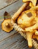 Raw Chanterelles Mushrooms Royalty Free Stock Photography