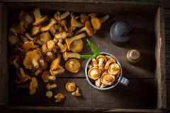 Raw chanterelles in an old wooden box. Top view of raw chanterelles in an old wooden box Stock Images