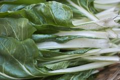 Raw chard leaves. Close up royalty free stock images