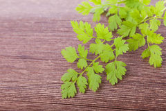 Raw chervil condiment  plant. Green fresh raw chervil condiment  plant on wooden background Royalty Free Stock Photo
