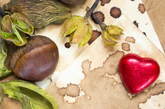 Raw chestnut, chocolate heart and dried plants background Royalty Free Stock Image