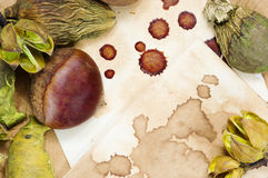 Raw chestnut and dried plants background Stock Images