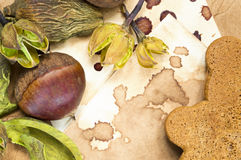 Raw chestnut, dried plants and cookie background Stock Image