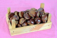 Raw chestnut Royalty Free Stock Photo