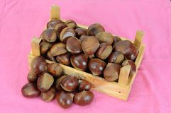 Raw chestnut Stock Photos