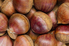 Raw chestnuts background. A background with lots of fresh raw chestnuts Stock Images