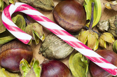 Raw chestnuts and candy cane background Stock Photos
