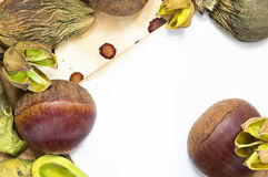 Raw chestnuts and dried plants background. A background with fresh raw chestnuts and dried plants and place for your text Royalty Free Stock Photos