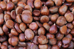 Raw chestnuts pile Stock Photography