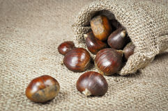 Raw chestnuts with shells Royalty Free Stock Photos