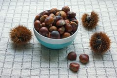 Raw chestnuts in shells and roasted chestnuts in bowl on checkered background royalty free stock images
