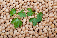Raw chick peas with fresh parsley Stock Image