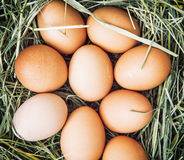 Raw chicken eggs in the basket with dry hay Stock Image