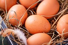 Raw chicken eggs in box Royalty Free Stock Photos