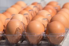 Raw Chicken eggs in egg box. Close up royalty free stock images