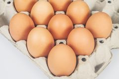 Raw chicken eggs in egg box on white. Background stock photos