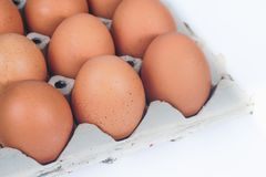 Raw chicken eggs in egg box on white. Background stock image