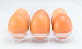 Raw chicken eggs. In egg box on white background Royalty Free Stock Photos