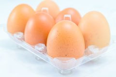 Raw chicken eggs. In egg box on white background Royalty Free Stock Photo