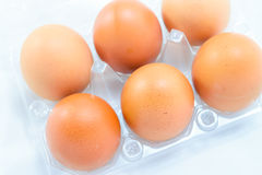 Raw chicken eggs. In egg box on white background Royalty Free Stock Images