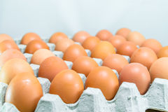 Raw chicken eggs. In egg box on white background Stock Photo