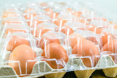 Raw chicken eggs. In egg box on white background Royalty Free Stock Photography