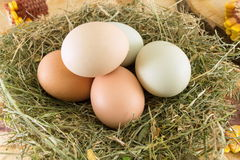Raw chicken eggs in a nest. Bunch of raw chicken eggs in a nest Royalty Free Stock Photos