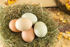Raw chicken eggs in a nest. Bunch of raw chicken eggs in a nest Royalty Free Stock Photography