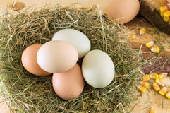 Raw chicken eggs in a nest. Bunch of raw chicken eggs in a nest royalty free stock photo
