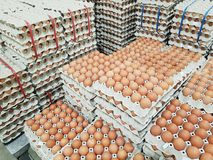 Raw chicken eggs in package for sale in supermarket. Fresh raw chicken eggs in package for sale in supermarket Royalty Free Stock Photo