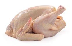 Raw chicken stock image