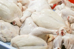 Raw chicken. Pile of raw/uncooked chicken Stock Image