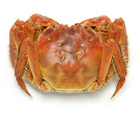 Raw chinese mitten crab, shanghai hairy crab. In bamboo steamer Stock Photography