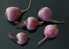Chioggia beet. Raw chioggia beets or candy cane beets on dark background Royalty Free Stock Photography
