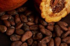 Raw chocolate theme. Close-up. Organic cacao pod Royalty Free Stock Photo