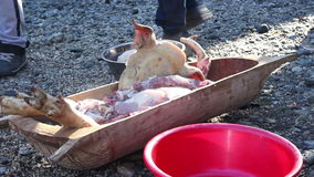 Raw Chopped Pig Meat stock video