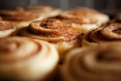 Raw Cinnamon Buns Royalty Free Stock Photos