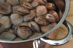 Raw clams. Clean raw clams ready to cook Royalty Free Stock Images