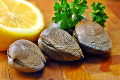 Raw Clams Stock Photo